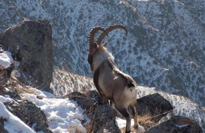 0146-Hunting-for-Altai-Ibex-in-Russia2
